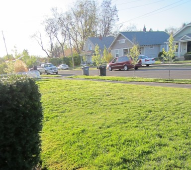 Our tiny lawn, newly mowed, and neatly edged.  :D  I think you may be able to see the neighbor mowing as well.